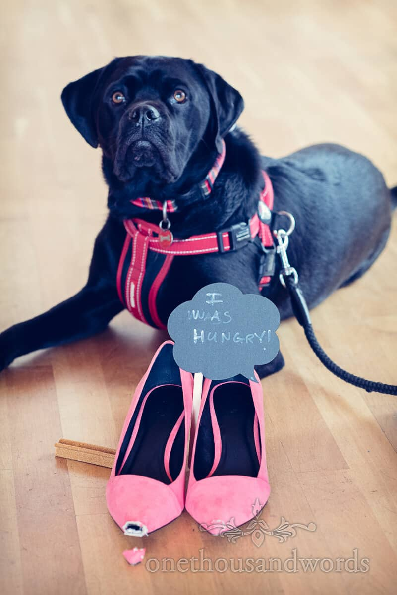 wedding dog ate bridesmaids shoes