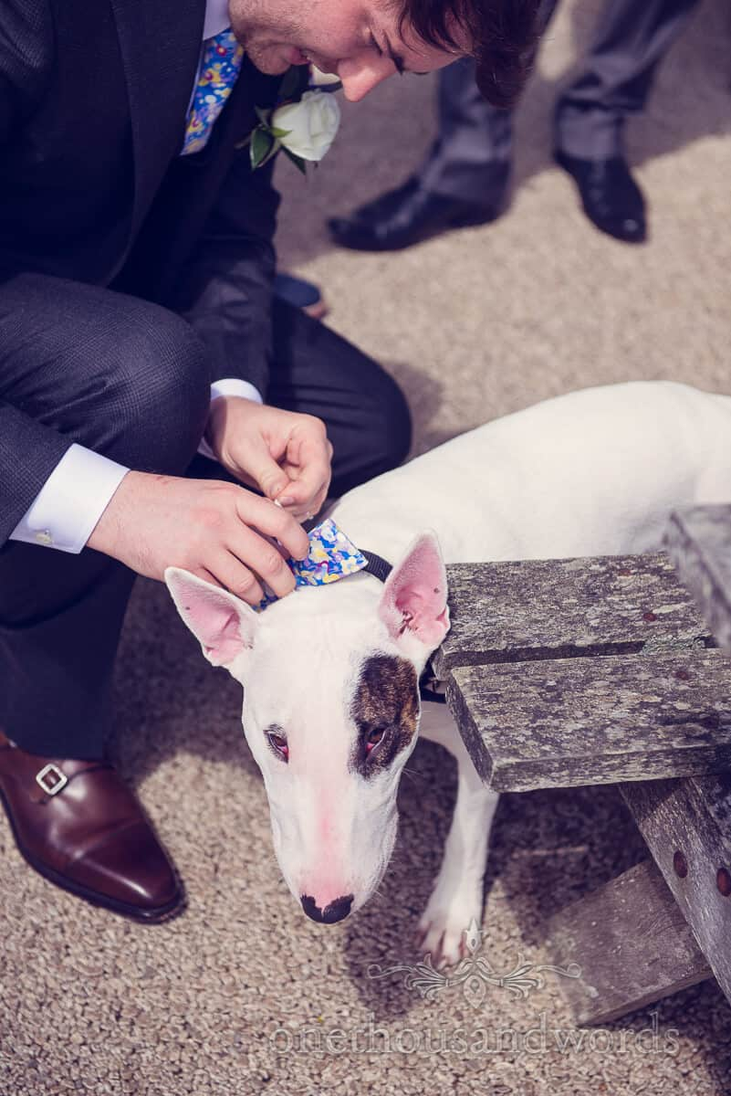 swanage wedding photographs of Dog in bow tie