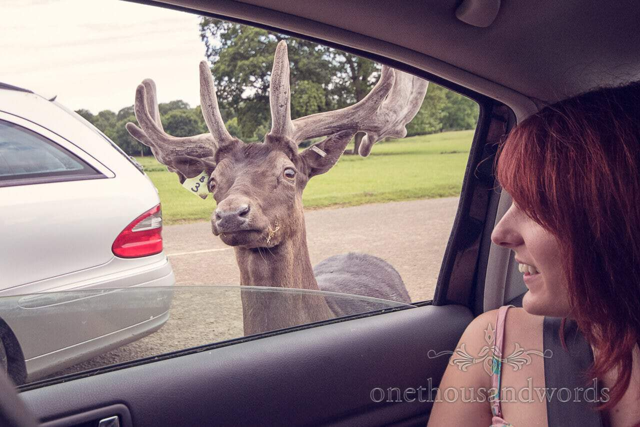 Bride with Longleat Stag