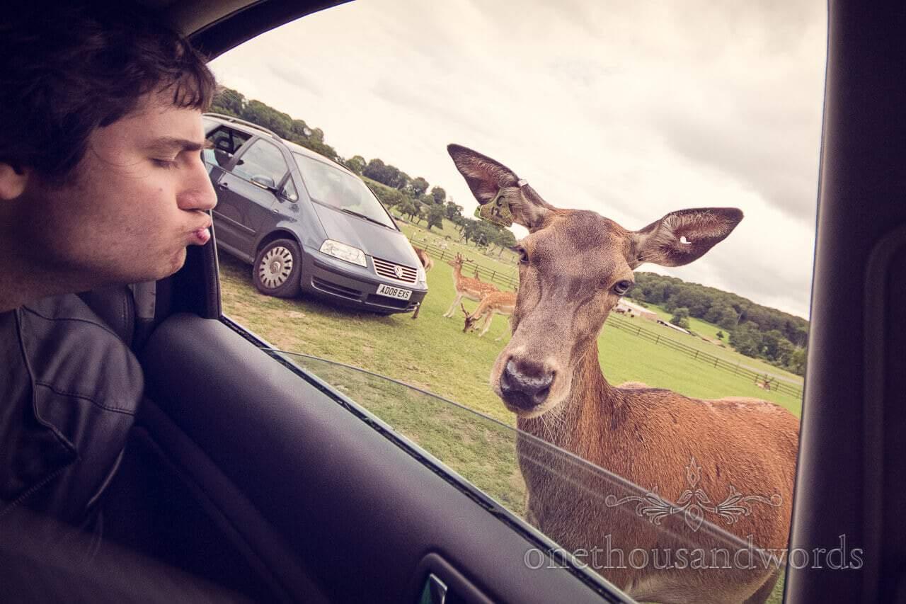 Groom blows kiss to Longleat Deer