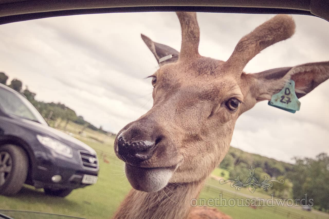 Longleat Deer Photograph