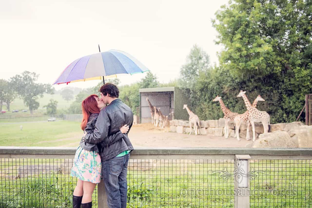 Longleat engagement photographs kissing in the rain