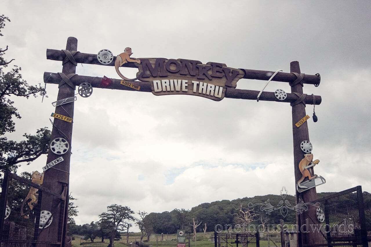 Monkey Drive through at Longleat