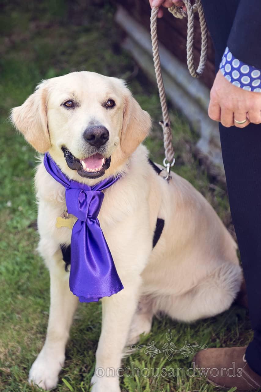 Dog at Wedding in Dorset in Blue Cravatte