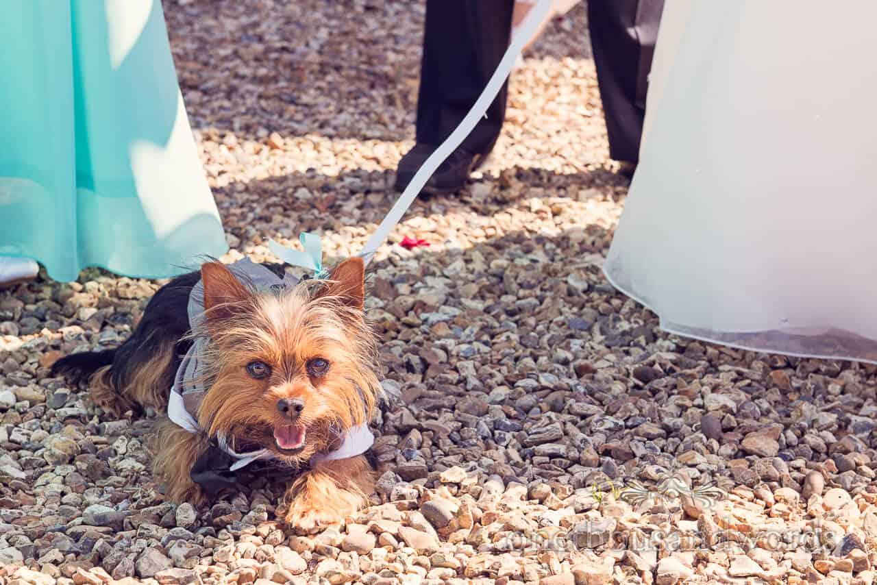 Dog at Parley Manor Wedding