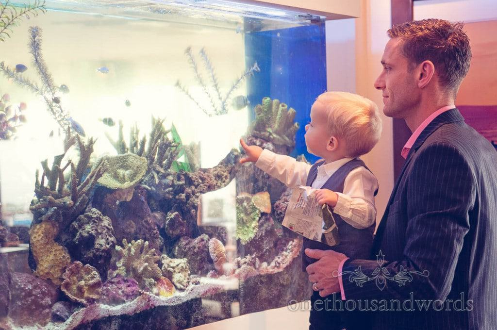 Small wedding guest examines large fish tank at Hotel wedding venue
