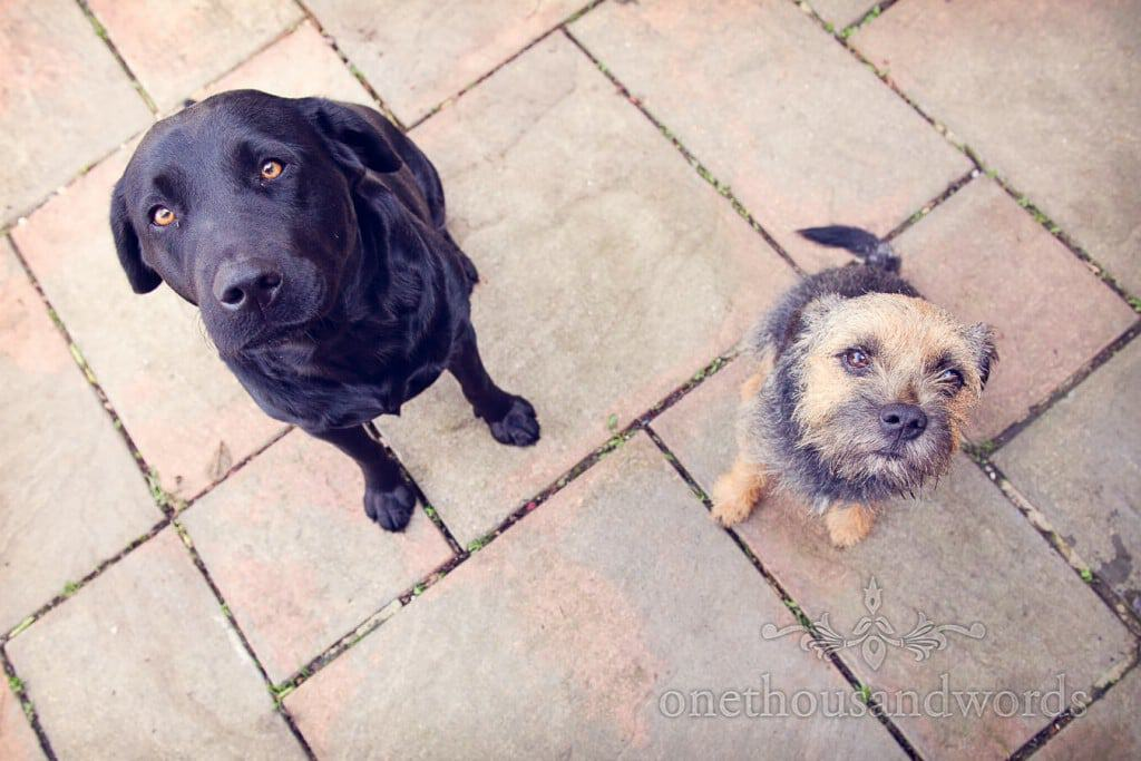 well behaved family dogs at countryside themed wedding