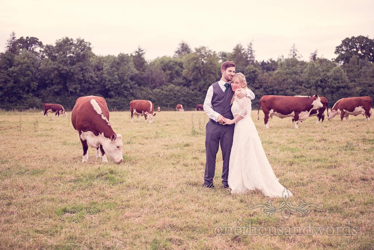 Bride and groom in countryside field with brown and white hereford cows