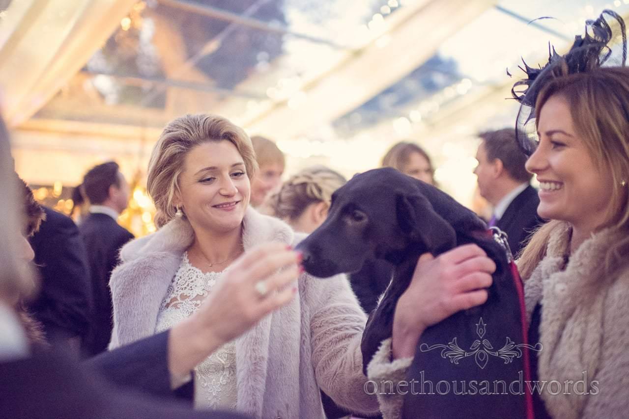 Bride with black lab at Plush manor wedding drinks reception