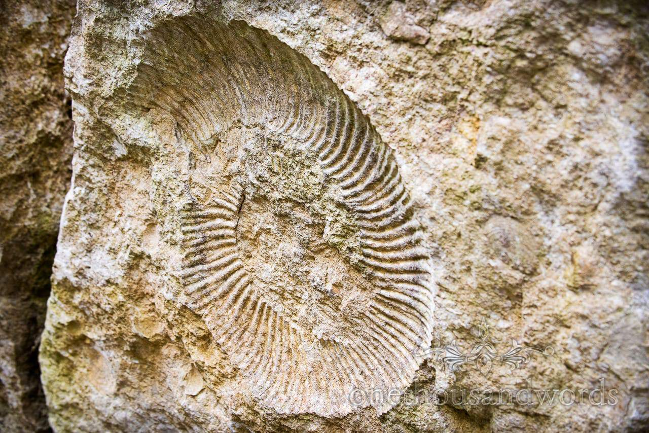 Ammonite fossil in rock at Durlston Country Park engagement photo shoot