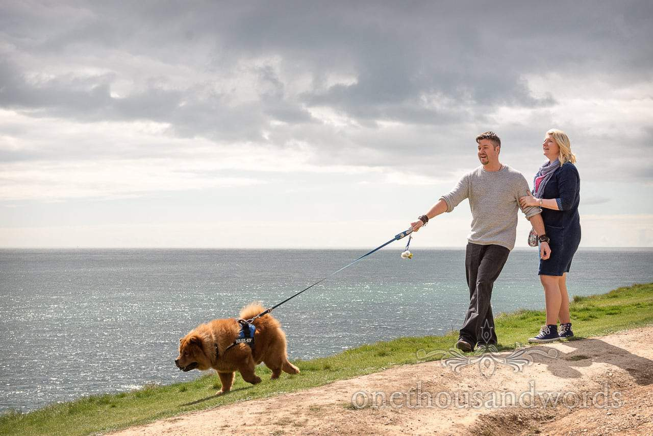 Chow Chow dog takes wedding couple for a walk at Durlston Country Park