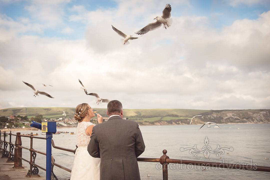 Seagulls mob bride and groom eating chips by the sea on wedding day in Swanage
