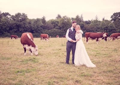 Bride and groom in countryside field with cows at Stockbridge Farm Barn wedding