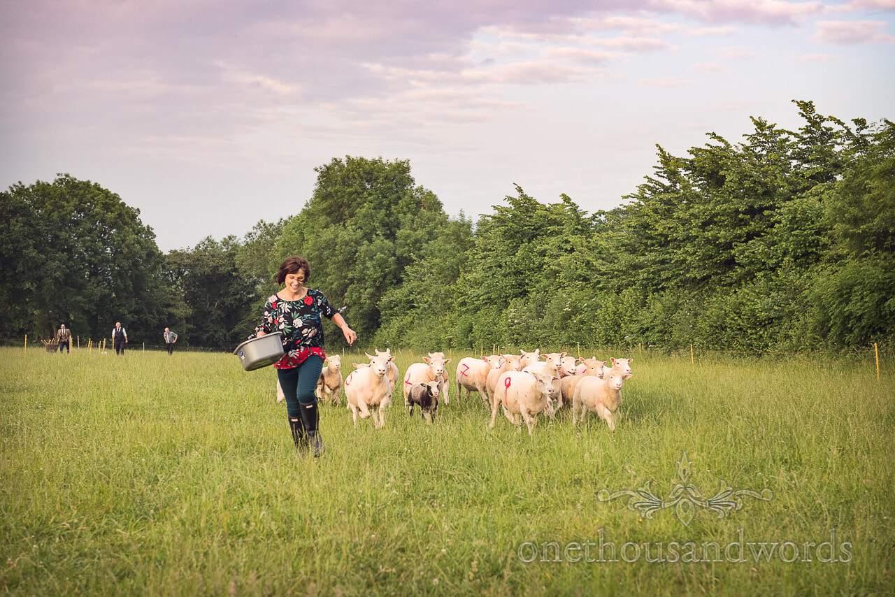 Sheep racing as wedding entertainment from Countryside Wedding Photos