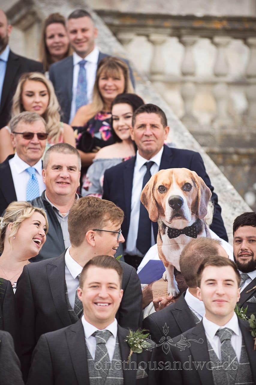 Buddy the beagle among group photos at woodland Lulworth Castle wedding