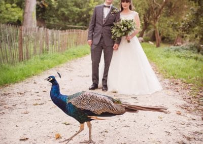 Peacock with bride and groom at Lulworth Castle Wedding Photographs