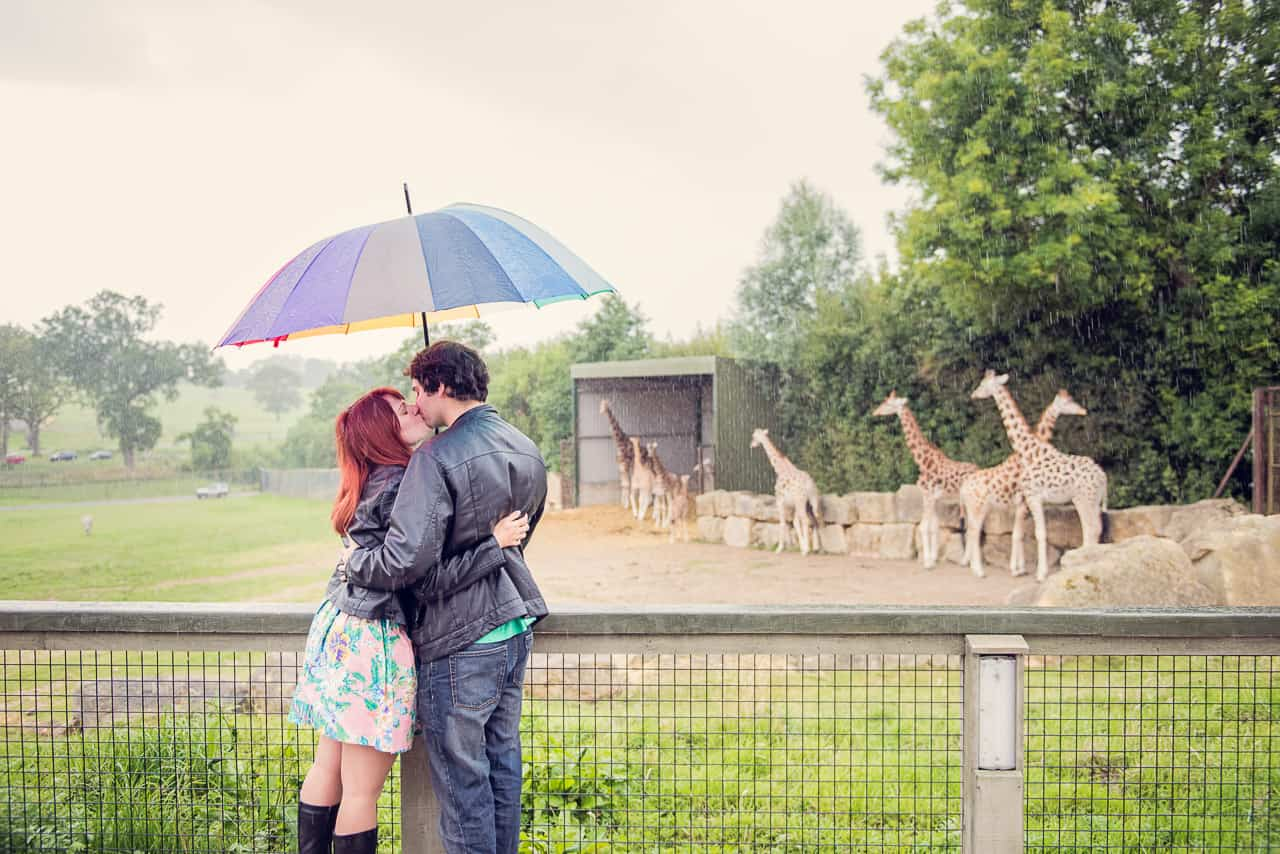 Example of why you need engagement photos couple kissing in rain under umbrella with giraffes in background