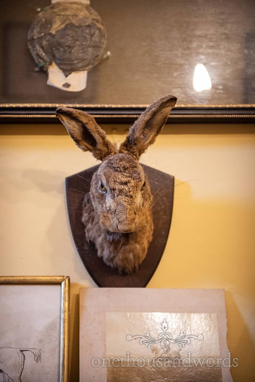 Wedding detail photograph of angry looking stuffed taxidermy hare's head on country house wedding venue wall decor