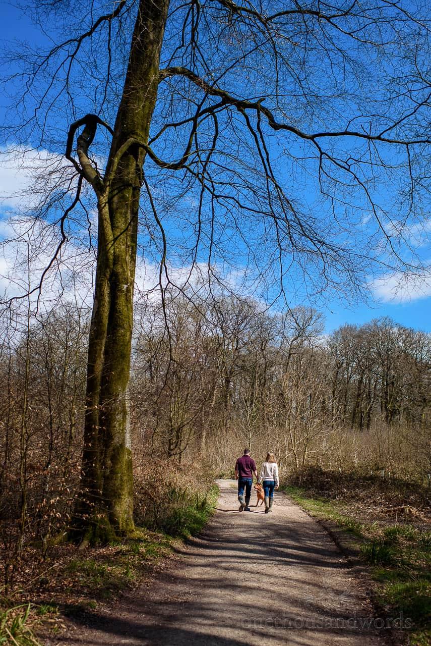 Dog walking couple walk through Wiltshire woodland